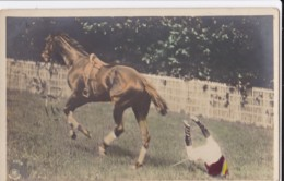AN03 Horse Racing - Jockey Falls Of His Horse - Early Undivided Back - Horse Show