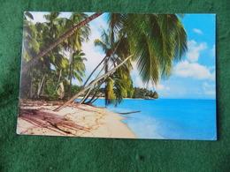 CARIBBEAN: BARBADOS Coconut Palms Colour 1985 Letchworth - Barbados