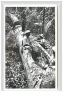 CAYENNE Indigènes Creusant Un Arbre Pour Faire Une Pirogue - Cayenne