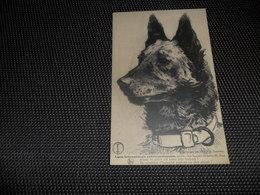 Chien ( 64 )    Hond  Antivivisectonniste - Chiens