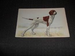 Chien ( 72 )    Hond - Chiens
