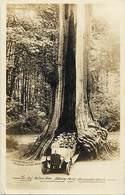 Pays Div- Ref R214- Canada - Arbres - Arbre -trees -the Big Hollow  Tree -stanley Park -vancouver  - - Canada