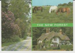 Postcard - The New Forest Three Views - Posted 6th Aug 1986  Very Good - Postcards