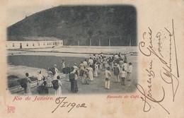 Rio De Janeiro - Fazendo De Cafe 1902 - Rio De Janeiro