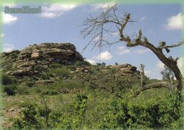 1 AK Somaliland * Laas Gaal - A Rock Complex With Prehistoric Cave Paintings * - Somalia