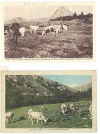2 CPA Avec Vaches : Pâturage à Cacavel // Vacherie Mont Gerbier Des Joncs  ( AN ) - Vaches