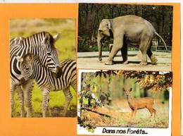Animaux Zèbres (amour Maternel...)  Eléphant D'Asie (Zoo Plaisance-du-Touch)  Biche (dans Nos Forêts..lot De 3 BE - Zèbres