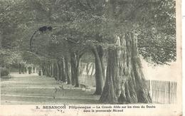 DOUBS - 25 - BESANCON - La Grande Allée Sur Les Rives Du Doubs - Promenade Micaux - Besancon