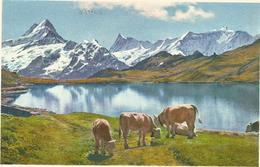 W1257 Grindwald - Bachsee Am Faulhorn - Schreckhorn - Finsteraarhorn - Fiescherhorner / Viaggiata 1962 - BE Berne