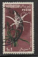 Somalia Scott # 203 Used Flower, 1955 - Somalia