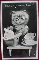 Cpa CHATS HABILLES  Petit CHAT CORVEE De VAISSELLE  , CAT DRESSED KITTEN  Washing Dishes KATZE Old PHOTO PC - Animaux Habillés