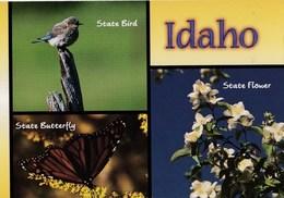 Etats- Unis  Idaho The Mountain Bluebird  And Syringa Flower And Butterfly  TBE - Etats-Unis