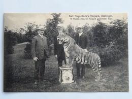 C.P.A. : Hambourg : Carl Hagenbeck's Tierpark, STELLINGEN, 19 Monate Alter, Im Tierpark Gezuchteter Tiger - Stellingen