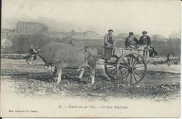 CP 64 - Environs De Pau - Attelage Boeufs  Béarnais . - France