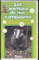 R19045   Les Animaux De Nos Campagnes - Documentaires