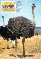 NAMIBIE CARTE MAXIMUM NUM.YVERT 526 FAUNE OISEAU AUTRUCHE - Namibie (1990- ...)