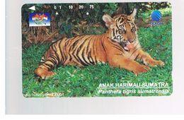 INDONESIA - TELKOM  -  ANIMALS: PANTHERA TIGRIS SUMATRENSIS          - USED - RIF. 10373 - Indonesia