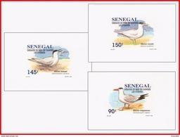 Senegal 1153/55  3 Feuillets De Luxe - Mouettes