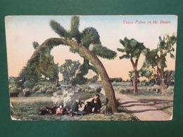 Cartolina Yucca Palms In The Desert - 1930 - Cartoline