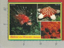 CARTOLINA VG KENIA - Below The Waves - Pesci Fish - 12 X 17 - ANN. 1992 - Kenia