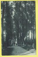 * Lier - Lierre (Antwerpen - Anvers) * (SBP, Nr 23) Boulevard Des Béguines, Bois, Animée, Béguinage, Rare, Old, TOP - Lier