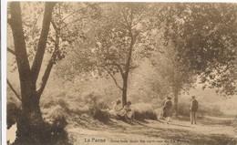 CP - Belgique - De Panne - La Panne - Sous Bois Dans Les Environs De La Panne - De Panne