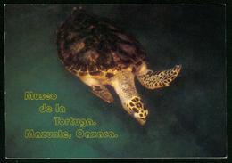 AKx Fauna | Schildkröte Im Turtle Museum In Mazunte Oaxaca Mexiko - Turtles