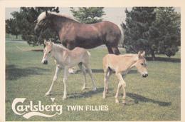 Carlsbery Twin Fillies , Ontario , Canada , 1980 - Horses
