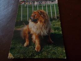 B716  Cane Non Viaggiata - Cani