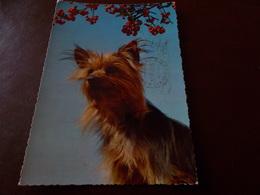 B716  Cane  Viaggiata - Cani