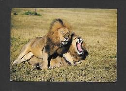 ANIMAUX - ANIMALS - HUMOUR - LIONS - AFRICAN WILDLIFE - BY SAPRA STUDIO - Lions