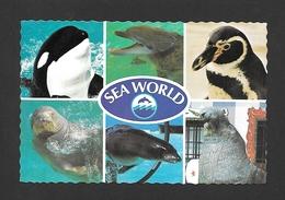 ANIMAUX - ANIMALS - HUMOUR - SEA WORLD AMERICA'S FINEST OCEANARIUM ORLANDO FLORIDA - BY SEA WORLD - Poissons Et Crustacés