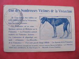 CPA -CHIEN - VICTIME DE LA VIVISECTION - LIGUE POUR LA DEFENSE DES ANIMAUX DE DIJON - Chiens