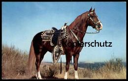 ÄLTERE POSTKARTE PFERD MIT BLESSE Sattel Horse Cheval Saddle Selle Zaumzeug Ansichtskarte Cpa AK - Pferde