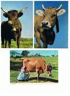 1908-631 10cp Vaches Diverses Dont 4 Bretagne  La Vente Sera Retirée Définitivement Le 11-11 - Vaches