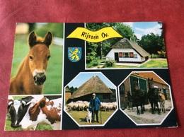 Nederland Rijssen ( Paard Horse Cheval Pferde Koe Vache Cow ) - Paarden