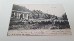 *KRUISWEG  Dorpzicht  Troupeau De Moutons Oblitéré En 1907 - Andere