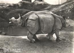 Nashörner / Zoo Basel / Rhino (D-A322) - Rhinocéros