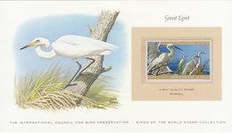 SENEGAL Great Egret.BARGAIN.!! - Vogels