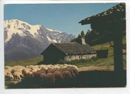 Les Alpes En Couleurs Naturelles : Alpage (n°7410 André Cp Vierge) Troupeau Mouton Bergerie - Paysans