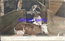 107801 URUGUAY COSTUMES SALADERO MATANZA COW POSTAL POSTCARD - Uruguay