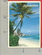 CARTOLINA VG SEYCHELLES - La Spiaggia - Palme E Mare - 10 X 15 - ANN. 1999 - Seychelles