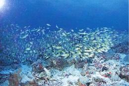 School Fishes, L'école Du Poisson, Schule Fischen, School Vissen, Escuela Peces (42) - Pescados Y Crustáceos