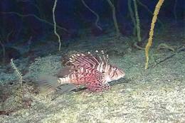 Pterois Volitans (38) - Pescados Y Crustáceos