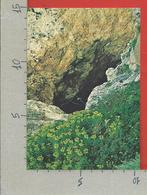 CARTOLINA NV ITALIA - CIRCEO - AZIENDA DI STATO FORESTE DEMANIALI - Grotta Delle Capre - 10 X 15 - Latina