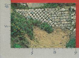 CARTOLINA NV ITALIA - CIRCEO - AZIENDA DI STATO FORESTE DEMANIALI - Lago Di Paola - Muro Romano In Opus - 10 X 15 - Latina