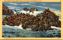 California San Francisco Seal Herd On Seal Rocks Near Cliff House - San Francisco