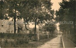 43499270 Hoogboom Yzerenweglaan Hoogboom - Belgique
