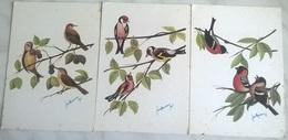 3 CARTOLINE DISEGNATE UCCELLI (1245) - Uccelli