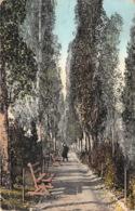Ialta - Boulevard De Pouchkine - Ukraine